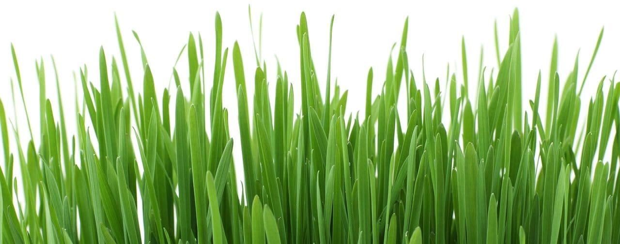 how to choose grass e1508354717961