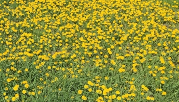 Best Weed Killer Reviews for 2020