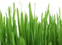 How To Choose The Right Type Of Grass For Your Lawn