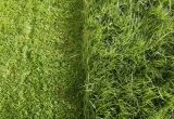 How To Grow Grass From Seed For A New Lawn